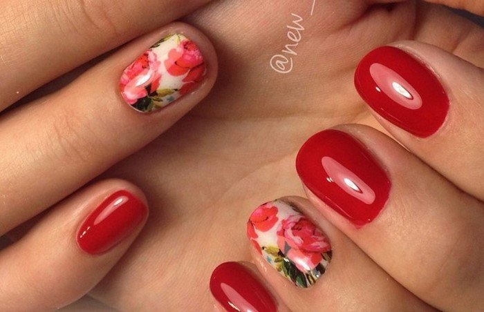красные цветы на нотях